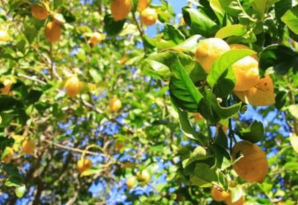 Les bienfaits du citron pour votre santé