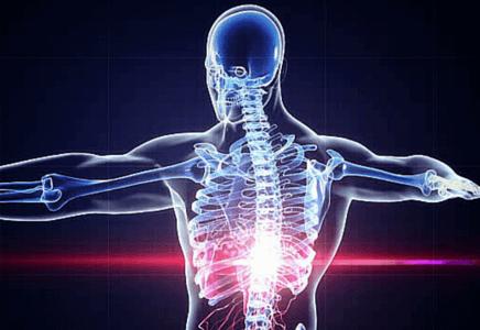 Articulation en musculation
