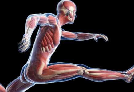 Atrophie musculaire en musculation