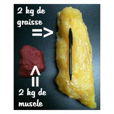 La différence de poids entre muscle et graisse