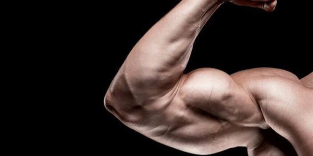 Comment se muscler les bras rapidement et efficacement ?