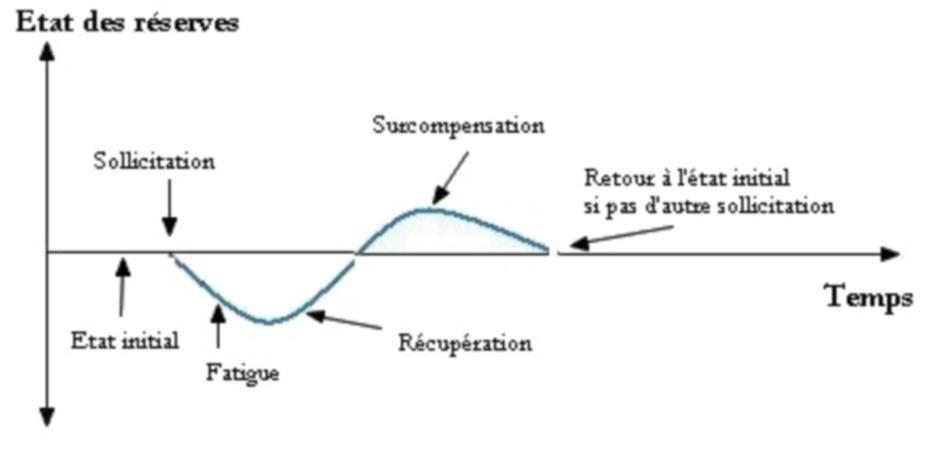 L'évolution de la récupération après la musculation