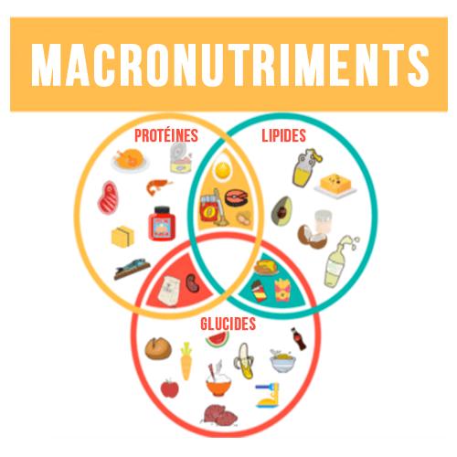 Répartition des macronutriments dans l'alimentation