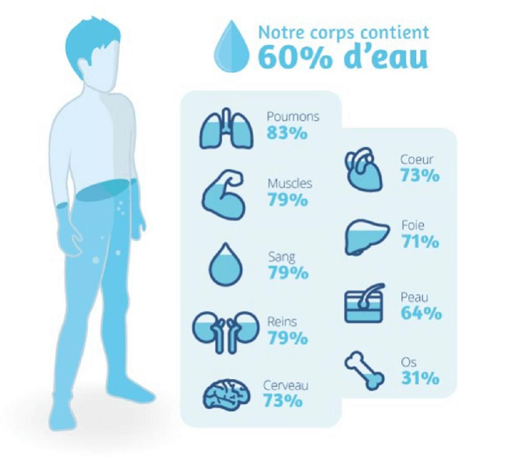 Quantité d'eau dans notre corps pour la musculation