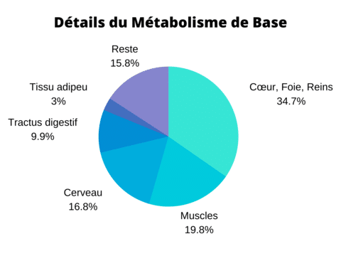 Métabolisme basal