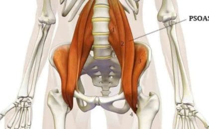 Muscler son psoas