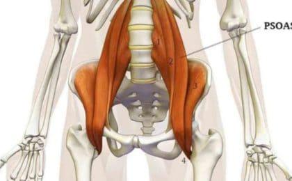 Muscler son psoas