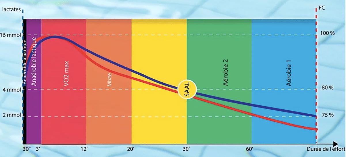 Zones intensité entrainement natation