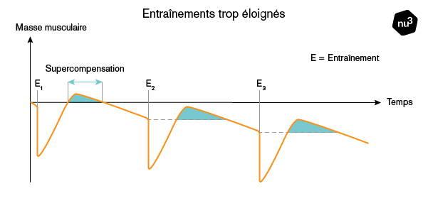 fréquence séances et prise de masse
