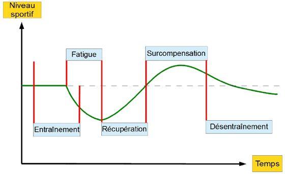 importance du repos en musculation