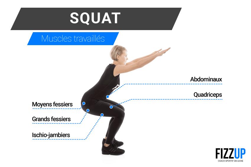 Muscles sollicités squat