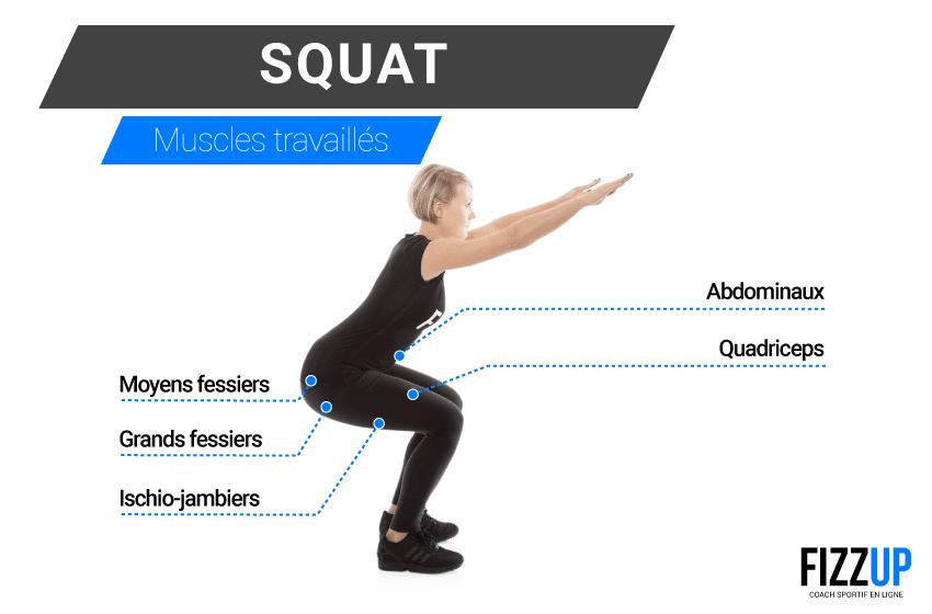 muscles travaillés squat