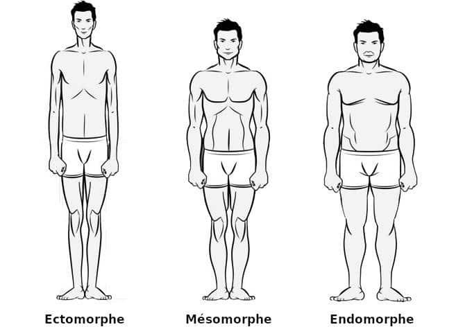 morphologie ectomorphe